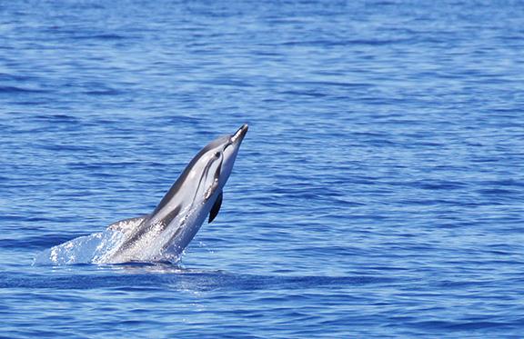 Sensibiliser les enfants de la Région à la protection de la Biodiversité Marine