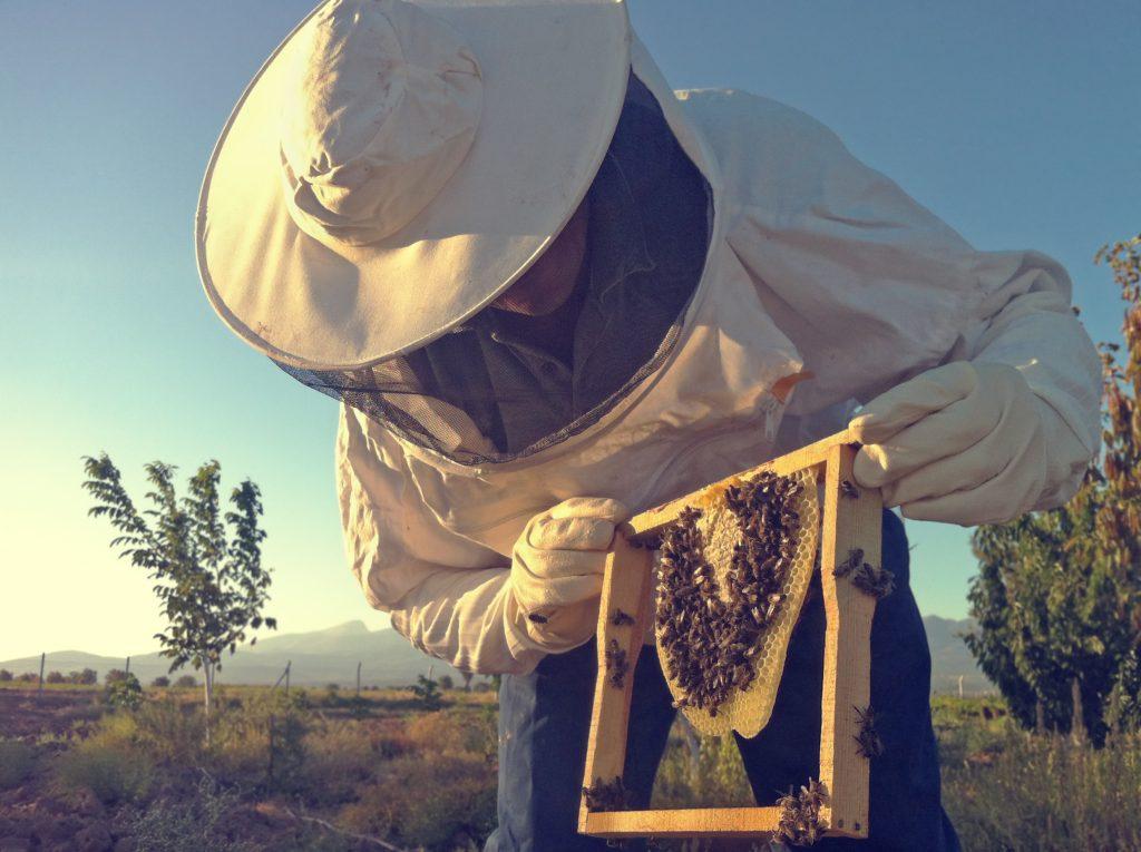 Un rucher de repeuplement pour les abeilles