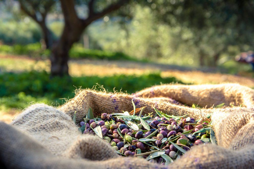 Scourtins et olives : tradition provençale