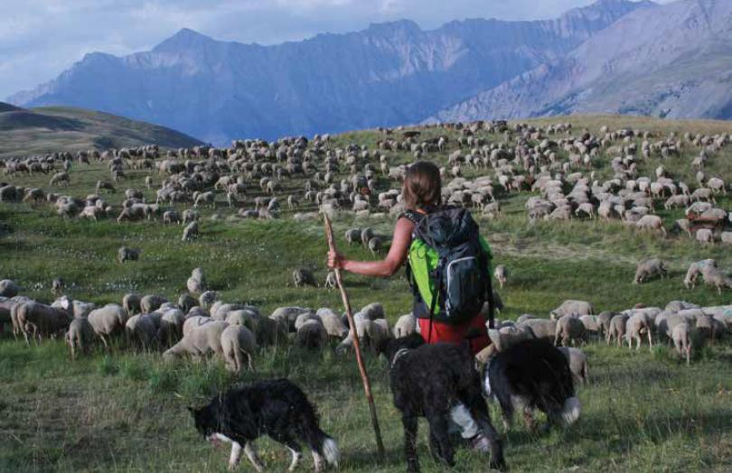 La Routo : sur les traces des troupeaux ovins